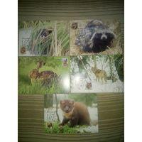 Беларусь 2008 звери комплект
