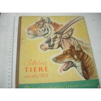 Книга на немецком языке про животных для детей Красиво иллюстрирована старая
