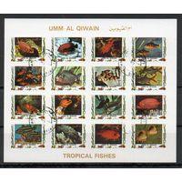 Рыбы ОАЭ 1972 год 1 б/з малый лист из 16 марок