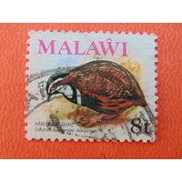Малави. Птицы.