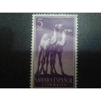Сахара 1957 колония Испании верблюды