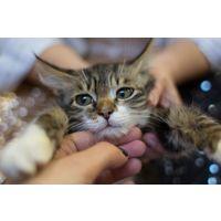 Симба замечательный котенок в дар!