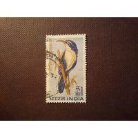 Индия 1968 г .Птица( Pomatorhinus schisticeps).