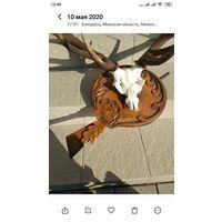 Рога европейского оленя на медальоне
