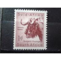 Южная Африка 1954 Стандарт, буйвол**