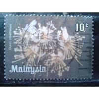 Малайзия 1979 Цветы 10с