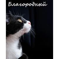 Особенный котенок Тори в дар