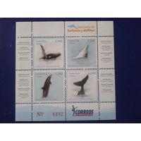 Коста-Рика 2008 Дельфины блок Mi-19,2 евро