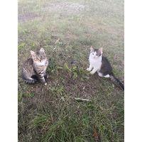 Котята бездомные родились и живут в деревне