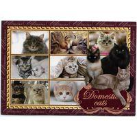 Открытка - Домашние коты