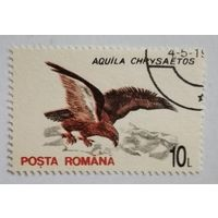 Румыния. Орел