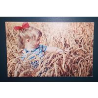 Пшеница золотая.