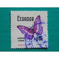 Эквадор. Бабочки.