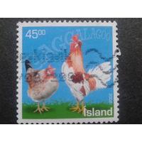 Исландия 2003 куры