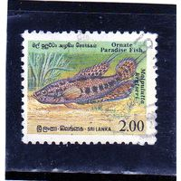Шри ланка. Mi:LK 933A. Изысканная рыба-рай (Malpulutta kretseri) Серия: Эндемичная рыба. 1990.