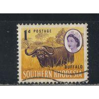 GB Колонии Родезия Южная 1964 EII Буйвол Стандарт #95