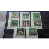 Марки - фауна, собаки, Гвинея
