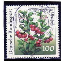 Германия. Ми-1508. Vaccinium vitis-idaea .Серия: Растения в Реннштайггартене, Оберхоф. 1991.
