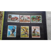Фауна, обезьяны, носороги, птицы, дикие кошки и др, Коморские острова (Коморы)