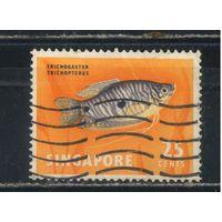 GB Колонии Сингапур 1963 Рыбы Стандарт #63