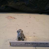 Продажа коллекции щенок (11)