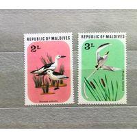 Мальдивы. Птицы.