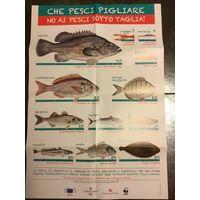 Плакаты рыбы