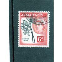 Ямайка. Ми-168. Фауна. Птицы. Вымпелохвостый колибри. Птица-доктор.1956.
