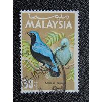 Малайзия. Птицы.