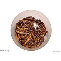 Зофобас- корм для пауков, ящериц, амфибий, скорпионов, муравьев, мышей, крыс, хомячков и лемуров.