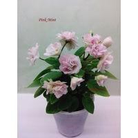 Фиалка Pink Mint трейлер - детка (фото в лоте)