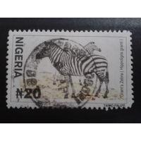 Нигерия 2001 зебры