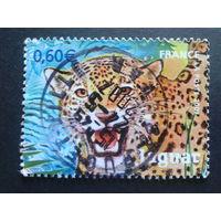 Франция 2007 леопард