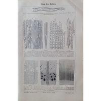 Bau des Holzes. Гравюра энциклопедическая   конец 19 века. 24x16 cm.