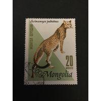 Промысловые животные. Монголия, 1966, марка из серии