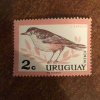 Уругвай. Фауна. Птицы. Zorzal