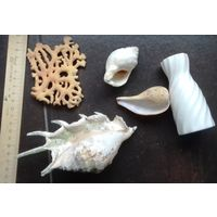 Для декора аквариума (редкие ракушка и коралл, ракушки и др.)