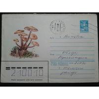 1983 хмк опята прошло почту