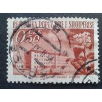 Албания 1953 стандарт , цветок