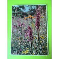 Открытка 1961г. На цветущей поляне. Беловежская пуща