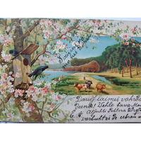 Поздравительная открытка. Латвия 1907г.