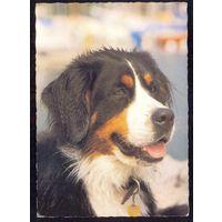 Фауна Венгрия собака