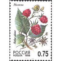 447-451. 1998 год. Флора. Лесные ягоды