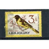 Уругвай. Черноголовый чиж