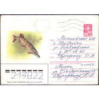 1985 год ХМК А.Исаков Щука 85-555