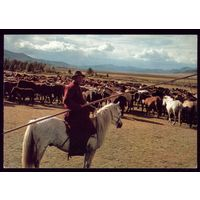 Монголия Пастух