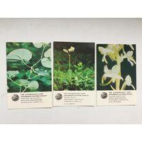 Календарики серии Охраняемое растение (ЛатвССР, 1984)
