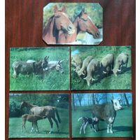 Фауна 3 лошадь