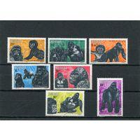 Руанда. Горная горилла