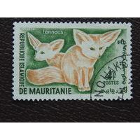 Мавритания. Фауна.